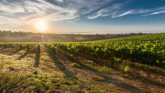 Best wineries in Tamar Valley